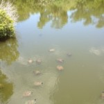 The Turtle Lagoon